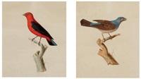 deux oiseaux (pair) by jean gabriel prêtre