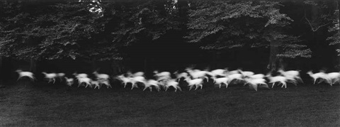 white deer ireland by paul caponigro