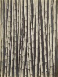 sugar cane by tina modotti