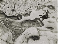 point lobos, california by minor white