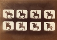 horse and rider motion study (composite) by eadweard muybridge