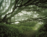 mist shrouded trees, ascension island: the panopticon by simon norfolk