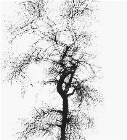 multiple trees by harry callahan