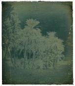 palmiers datiers assouan, égypte by joseph-philibert girault de prangey