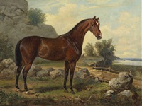 cavallo by johan georg arsenius