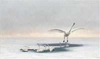 winter scenery with swans by carl (jens erik c.) rasmussen