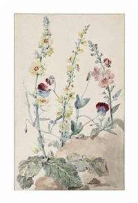 study of verbascum and sweet-peas (lathyrus odoratus) by aert schouman