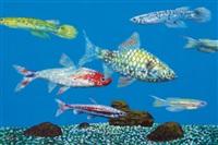fish tank by ahn chang-hong
