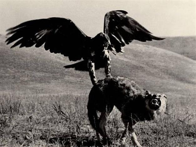 the berkut hunting by max vladimirovitch alpert