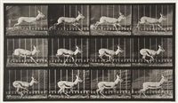 antelope trotting, plate 698 by eadweard muybridge
