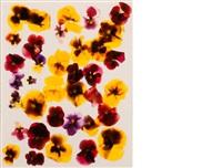 untitled (flowers) by adam fuss