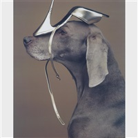 shoe head by william wegman