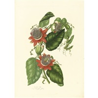 a collection of passion flowers from nature (bk w/ 18 works; folio) by mary lawrance
