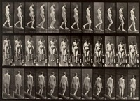 animal locomotion, plate 117 by eadweard muybridge