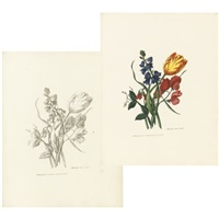 sketches of flowers from nature (bk w/ 11 works; folio) by mary lawrance
