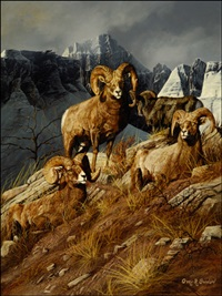 bighorn mountain sheep by gary r. swanson
