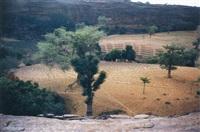 campo con caminos (yawa field) by gabriel orozco