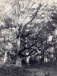 chêne et sous-bois by eugène cuvelier