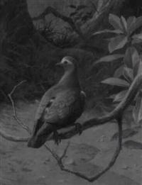 an emerald dove by david morrison reid henry