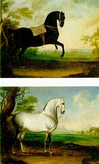 a black lipizzaner stallion by leopold axtmann