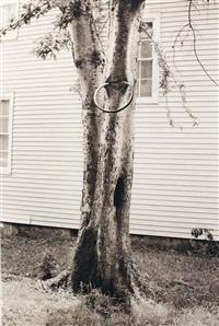 money tree by david hammons
