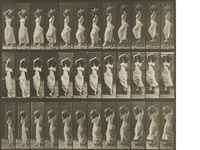 selected plates (from animal locomotion) (236 works) by eadweard muybridge