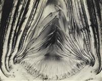 artichoke - halved by edward weston