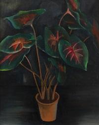 filodendron by georges (karpeles) kars