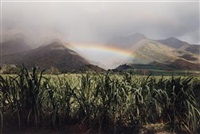 rainbow and cane, olowalu, maui by elaine mayes