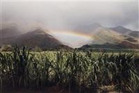 rainbow and cane, olowalu, maui by elaine mayes