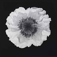 poppy by robert mapplethorpe