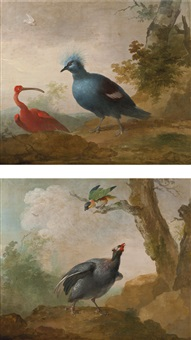 a helmeted guinea fowl and a black headed caïque on a branch and a red ibis and a victoria crowned pigeon (pair) by aert schouman