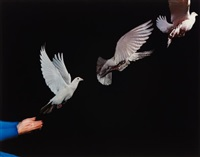 pigeon in flight by harold eugene edgerton