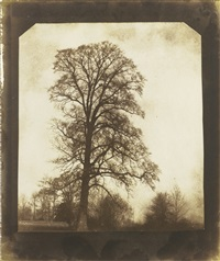 elm tree at lacock (winter) by william henry fox talbot