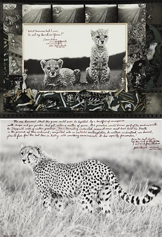 cheetah cubs orphaned at mweiga nr nyeri for the end of the game and hunting cheetah on the taru desert kenya june 1960 2 works in double sided frame by peter beard