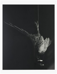 pheasant by robert mapplethorpe