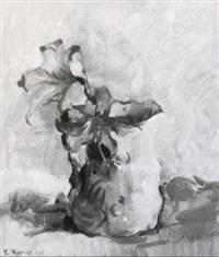 när blommar krasse
