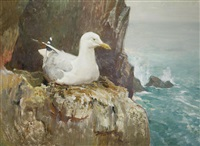 seagull on a cliff by charles walter simpson