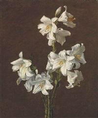 branche de lis sans vase by henri fantin-latour