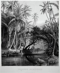 indischer palmenwald (+ urwald auf ceylon; 2 works) by wilhelm von abbema