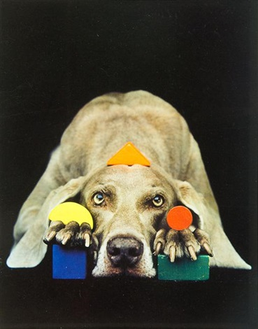 basic fay by william wegman