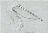 a dalmatian pelican by john ruskin