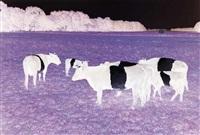 mad cows by marijke van warmerdam