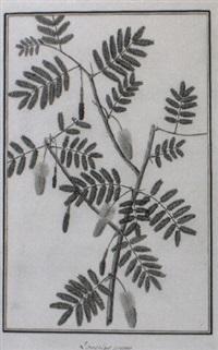plant study by baldassare cattrani