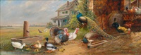 poultry in a yard by andré hofmann