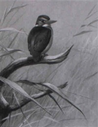 a pygmy kingfisher perched in the reeds by david morrison reid henry
