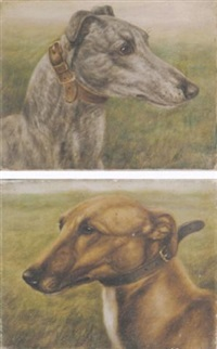 the celebrated greyhound