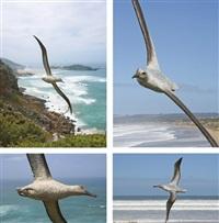 wandering albatross by robert leggat