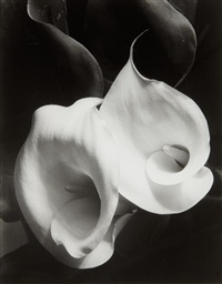 two callas by imogen cunningham