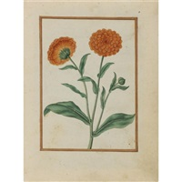 pot marigolds by jacques le moyne (de morgues)